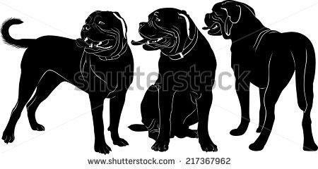 Dogue De Bordeaux Stock Photos, Royalty.