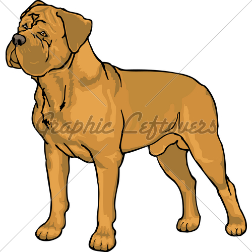 Dogue De Bordeaux · GL Stock Images.