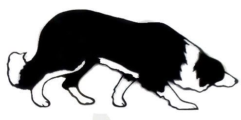 border collie outline.