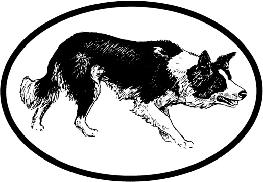 Free Border Collie Outline, Download Free Clip Art, Free.