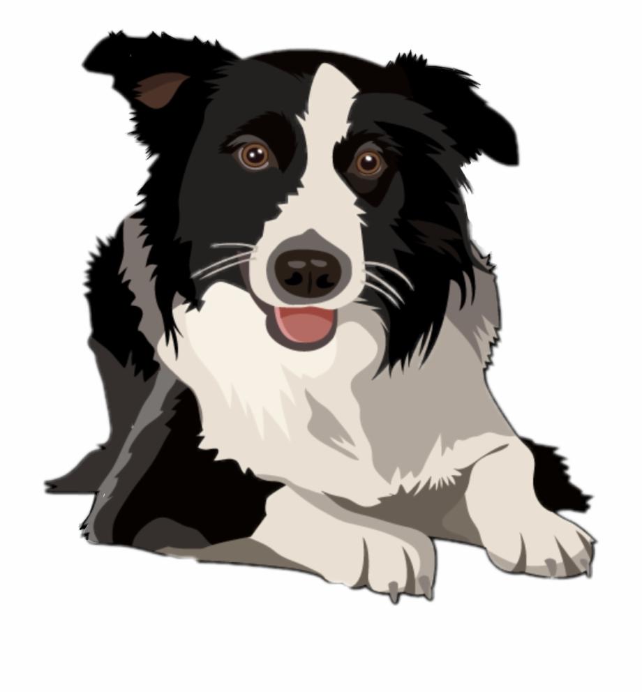 dog #bordercollie #border Collie #freetoedit.