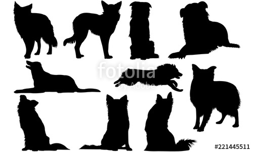 Border Collie Dog svg files cricut, silhouette clip art, Vector.