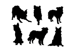 Border Collie Free Vector Art.