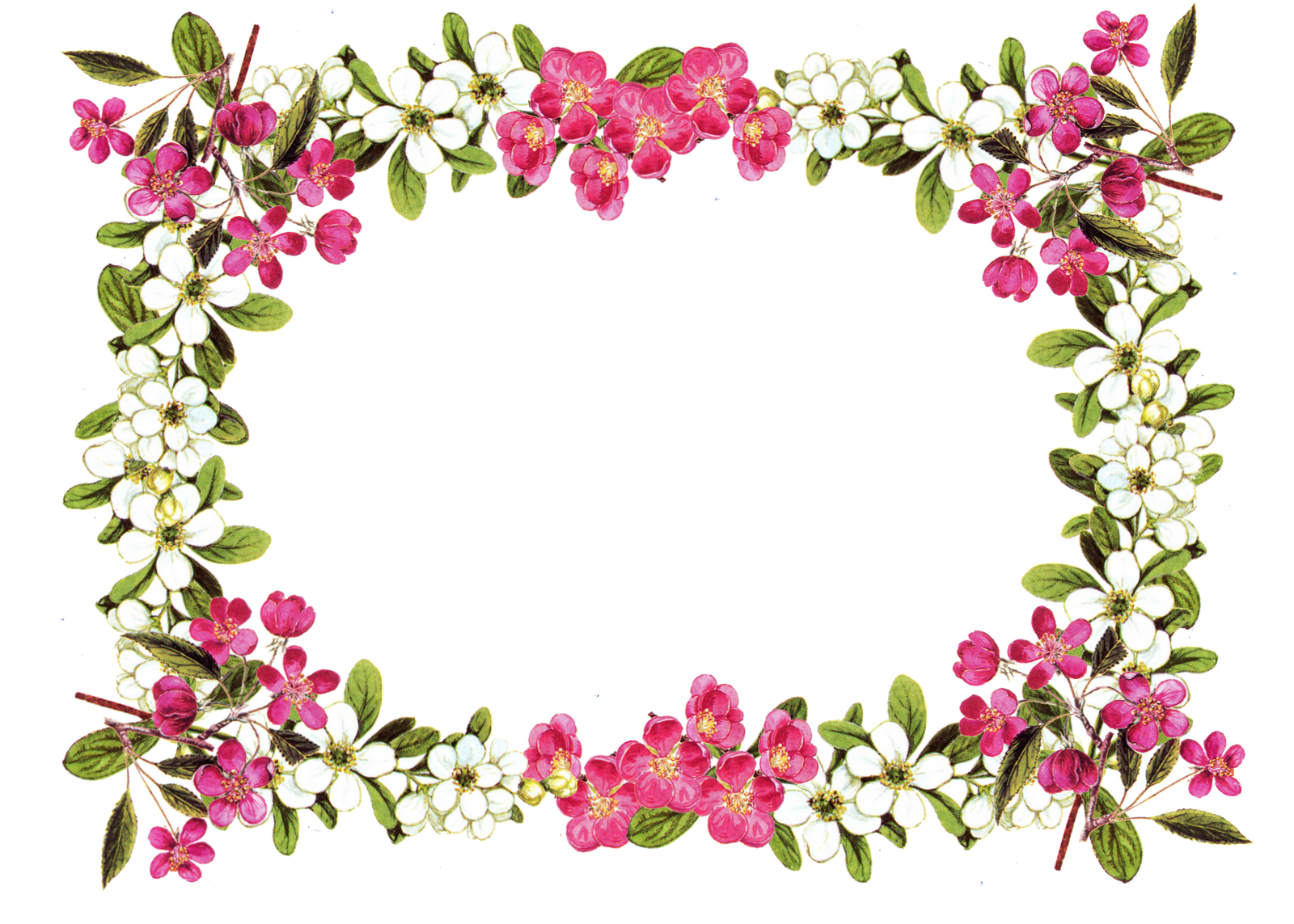 free digital flower frame png in vintage design.