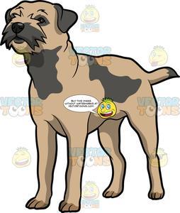 An Alerted Border Terrier Dog.