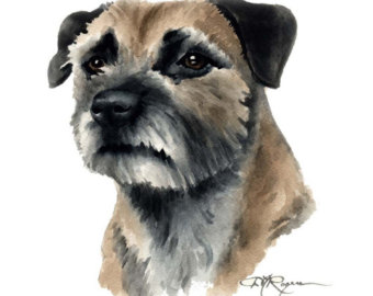 border terrier dog.