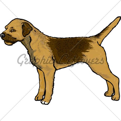 Border Terrier · GL Stock Images.