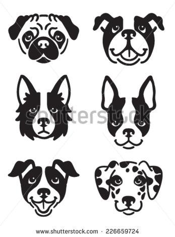 Boston Terrier Stock Photos, Royalty.