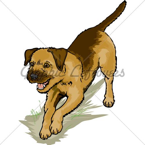 Border Terrier Dig · GL Stock Images.