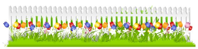 Tulip Stock Illustrations.