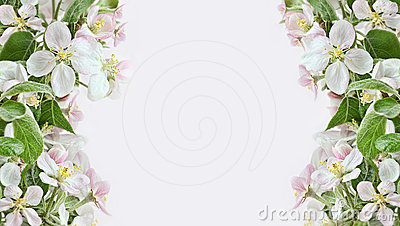 Apple Blossom Borders On Pink Background Royalty Free Stock Photos.