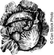 Borecole Clip Art Vector Graphics. 8 Borecole EPS clipart vector.
