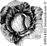 Borecole Clip Art Vector Graphics. 6 borecole EPS clipart vector.