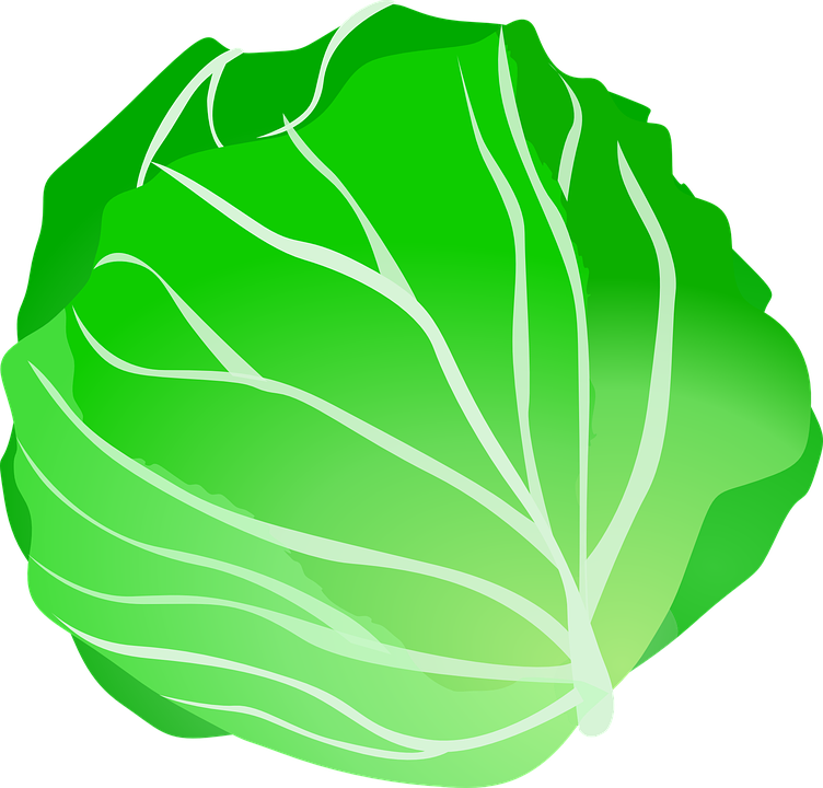 Free vector graphic: Cabbage, Vegetable, Food, Fresh.