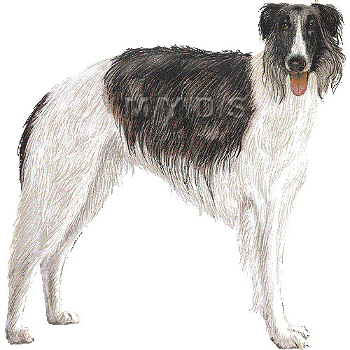 Borzoi, Russian Wolfhound clipart graphics (Free clip art.