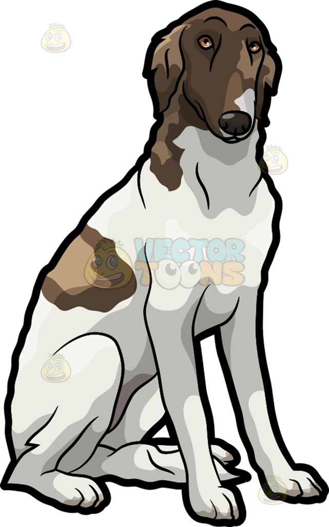 A Shy Borzoi Pet Dog Cartoon Clipart.