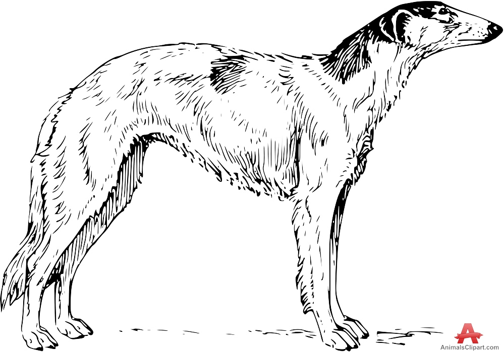 White Borzoi Dog Drawing Clipart.