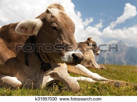 Stock Photography of head of cow (bos primigenius taurus), with.