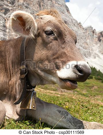 Stock Image of head of cow (bos primigenius taurus), with cowbell.