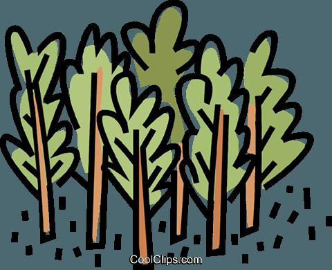 bosco, gli alberi immagini grafiche vettoriali clipart.