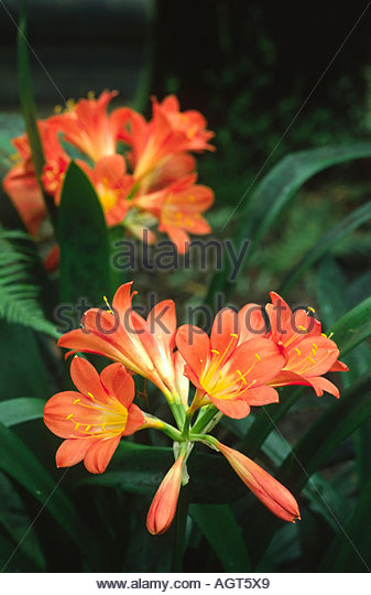 Exotic South African Plants Stock Photos & Exotic South African.