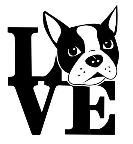 1000+ images about Boston Terrier on Pinterest.