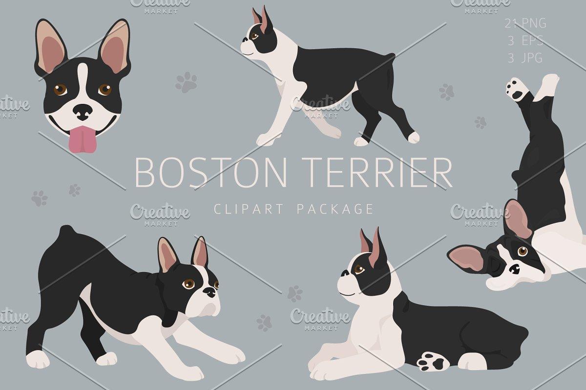 Boston terrier clipart ~ Illustrations ~ Creative Market.