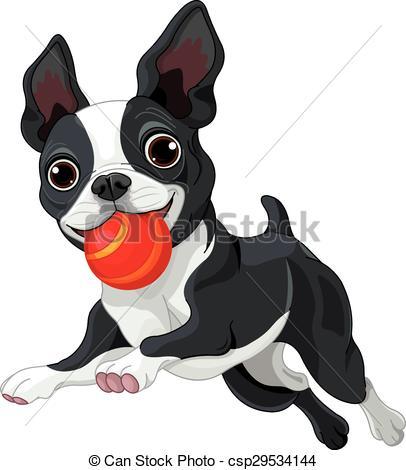 Boston Terrier Holds Ball.