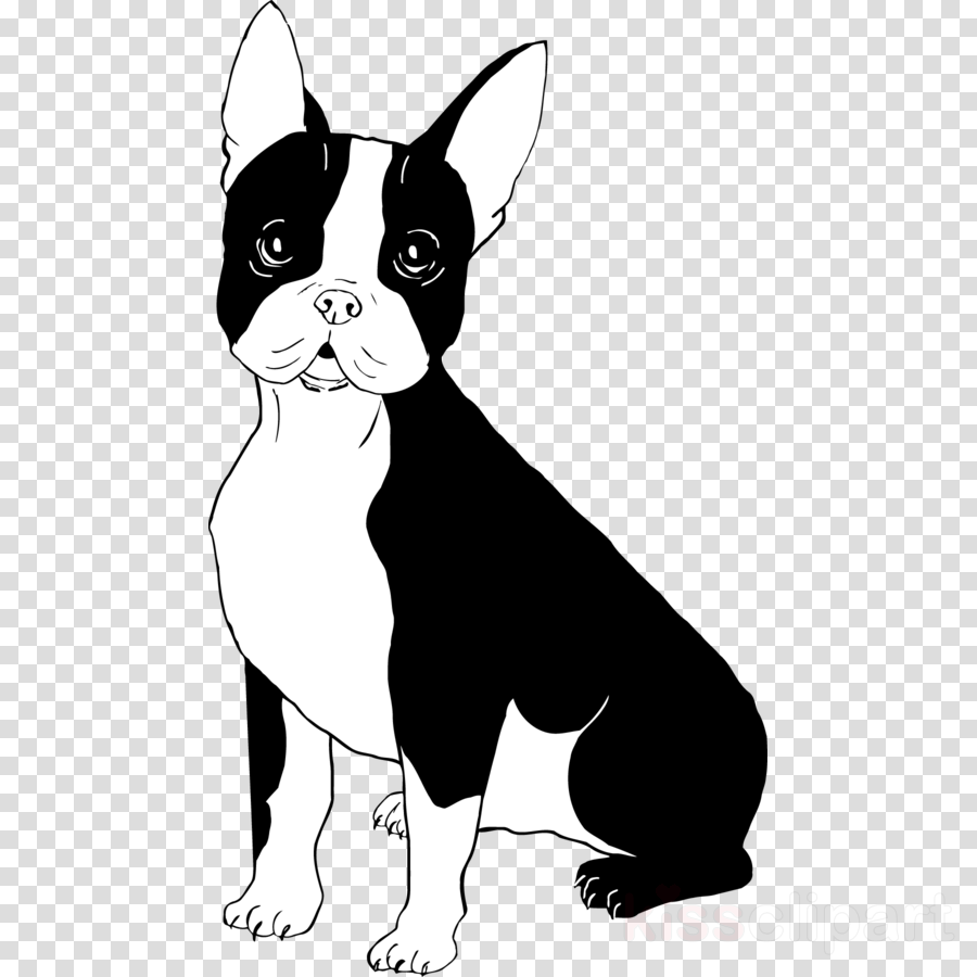 Puppy, Bulldog, Dog, transparent png image & clipart free download.
