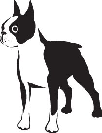 Boston Terrier Dog Clipart.