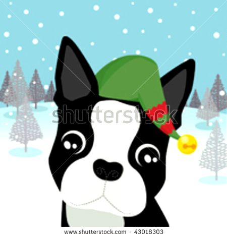 Boston Terrier Clip Art Photo.