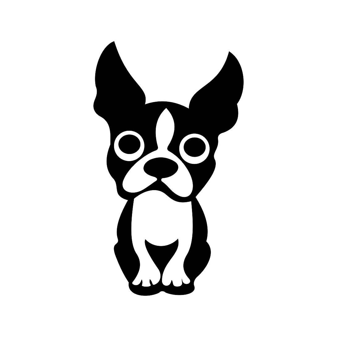 Boston Terrier Drawing.