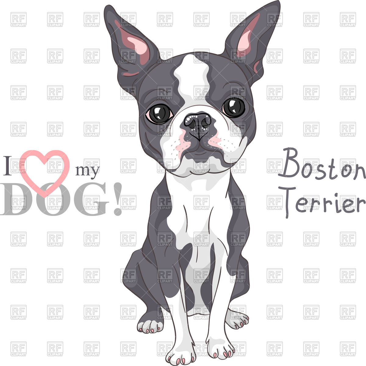 Serious dog Boston Terrier breed sitting Stock Vector Image.