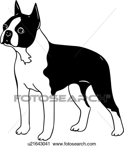 , animal, boston, breeds, canine, dog, show dog, terrier, Clipart.