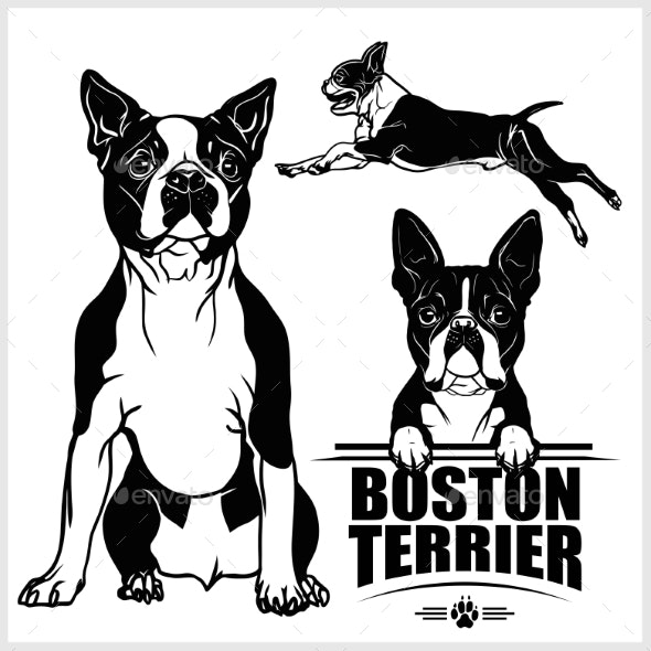 Boston Terrier Dog Vector Set Isolated.