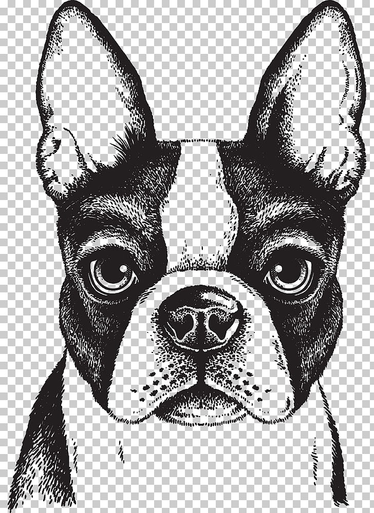 Boston Terrier French Bulldog Puppy, Painted dog, Boston.