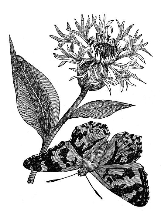 Free botanical clip art.