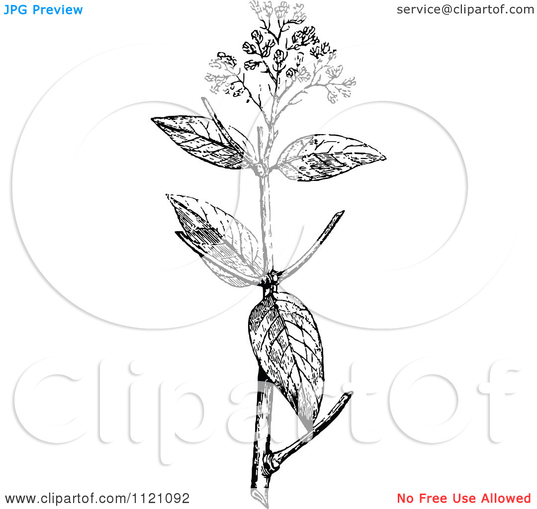 Clipart Of A Retro Vintage Black And White Botanical Plant With.