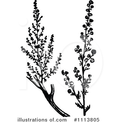 Botanical Clipart #1113805.