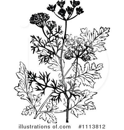Botanical Clipart #1113812.