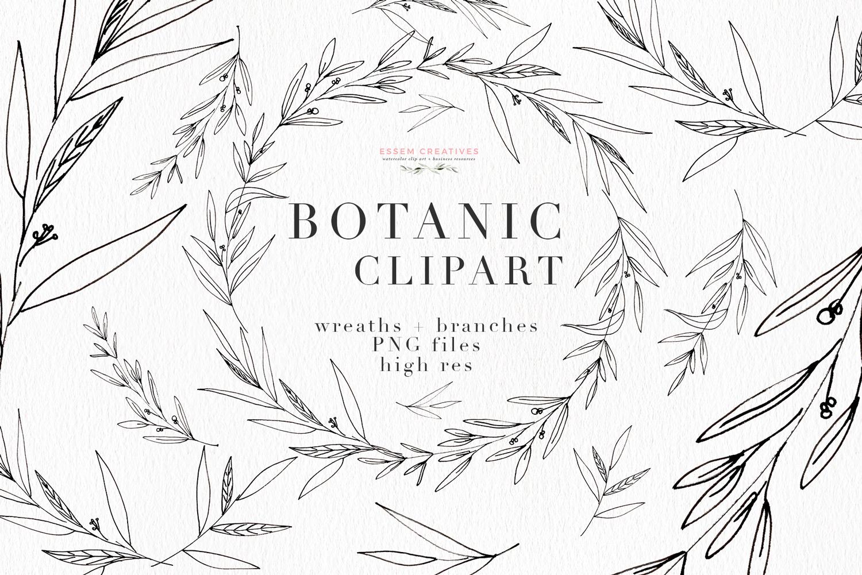 Botanical Clipart, Botanical Print Illustration, Greenery Eucalyptus Olive  Line Art.