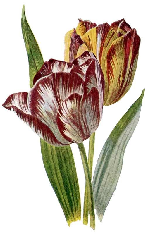 Vintage Spring Flowers Botanical Clip Art @ Vintage Fangirl.