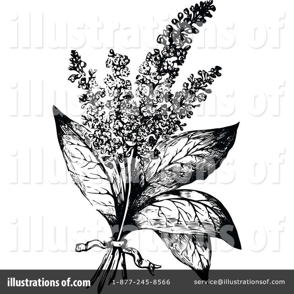 Botanical Clipart #1113826.