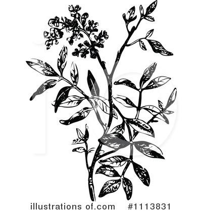 Botanical Clipart #1113831.