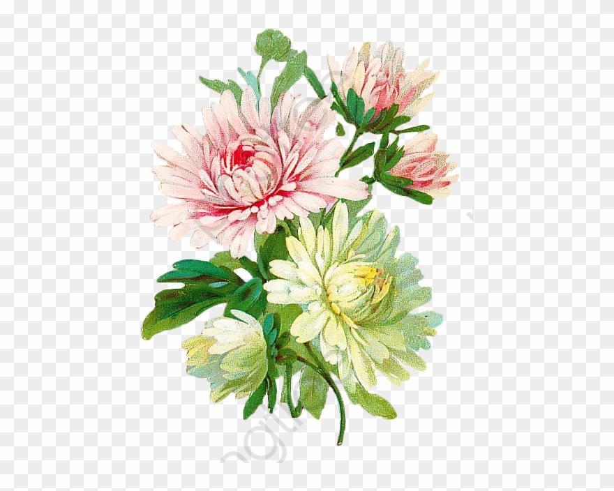 Vintage Floral Botanical Floral Clipart Vintage.