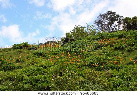 Clipart kauai botanical garden.