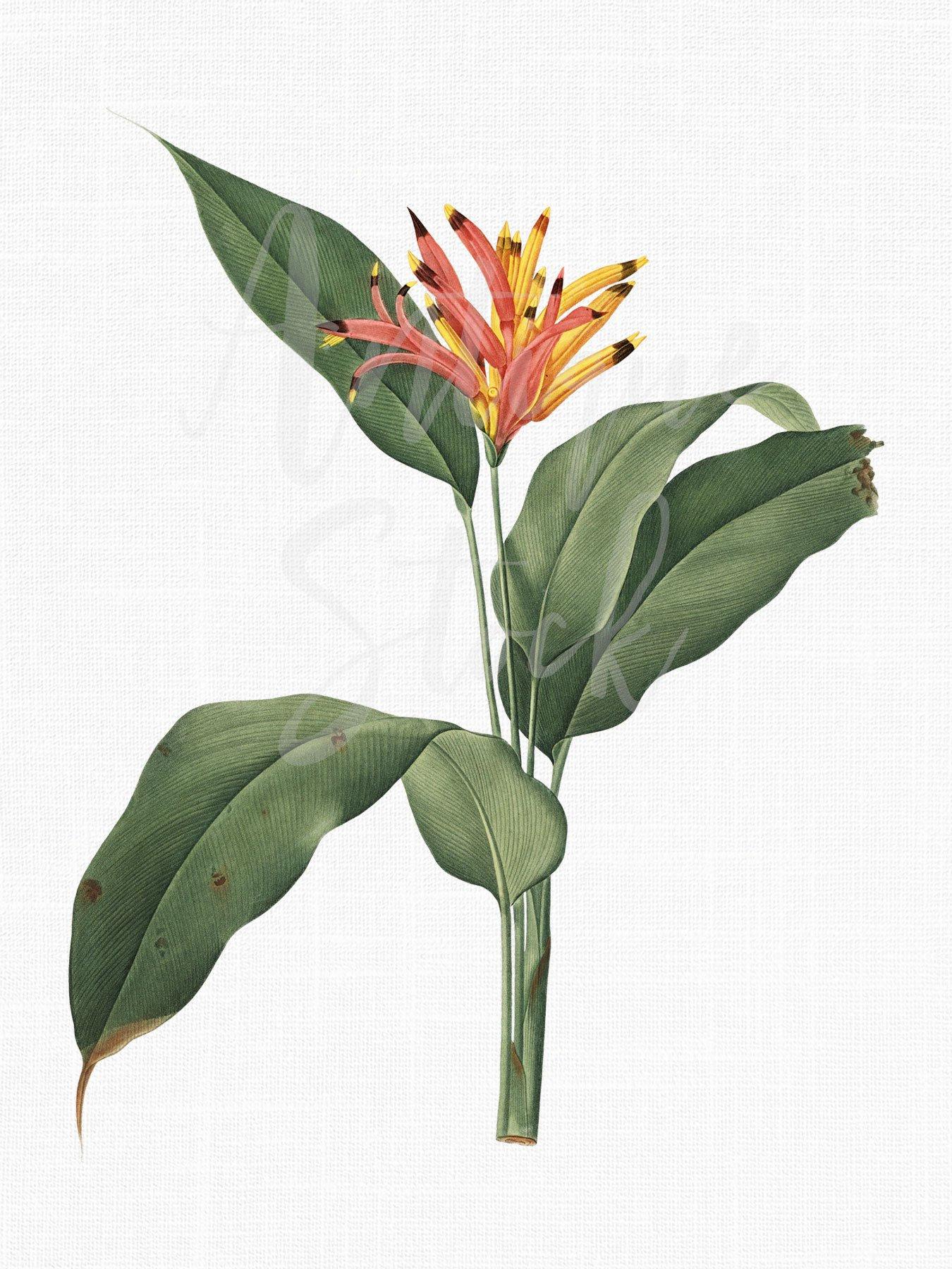 Botanical Illustration PNG & JPG Files