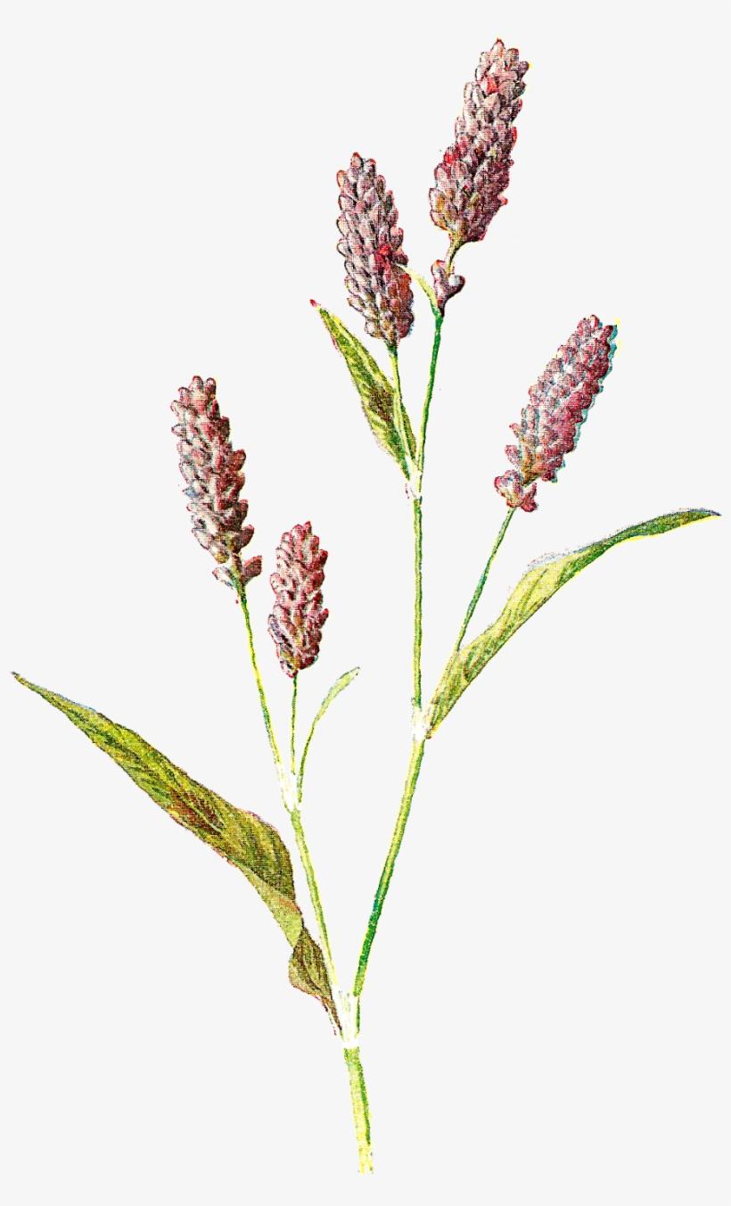 Flower Illustration Png.