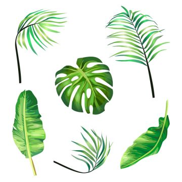 Botanical Png, Vector, PSD, and Clipart With Transparent Background.