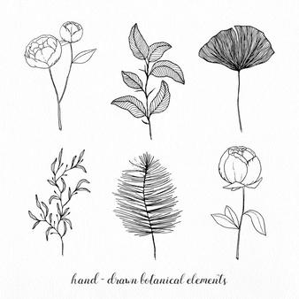 Botanical Vectors, Photos and PSD files.